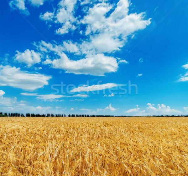 синий облачный небе области ячмень Сток-фото © mycola
