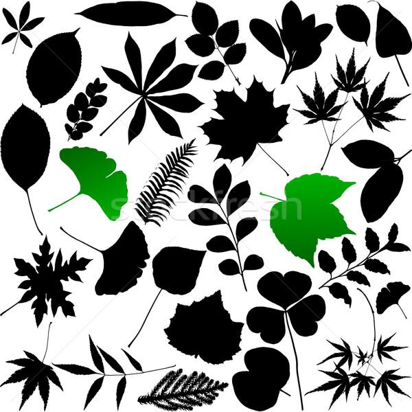 Stok fotoğraf: Yaprakları · siluet · orman · dizayn · yaprak · bahçe