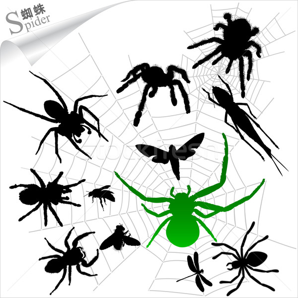 Silhouettes of insects - Spiders Stock photo © myfh88