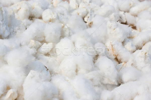 хлопка промышленности фермы завода китайский белый Сток-фото © myfh88