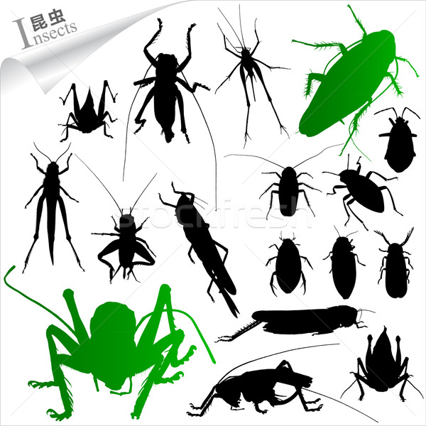 Silhouettes insectes jardin groupe jambes noir Photo stock © myfh88
