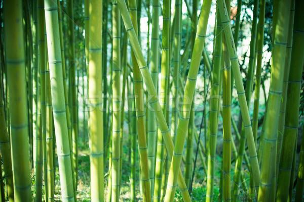 Zielone bambusa lasu wiosną charakter roślin Zdjęcia stock © myfh88