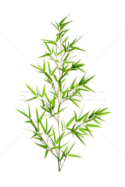 бамбук листьев изолированный белый весны трава Сток-фото © myfh88