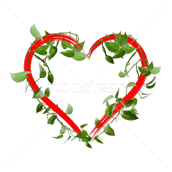 зеленые листья сердце изолированный белый любви природы Сток-фото © myfh88