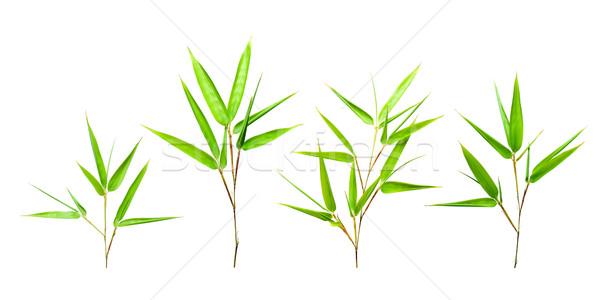 Yeşil bambu yaprakları yalıtılmış bahar orman Stok fotoğraf © myfh88