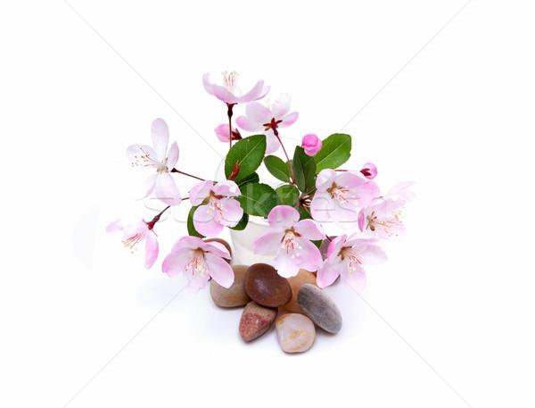 Melocotón flor piedras primavera aislado Foto stock © myfh88