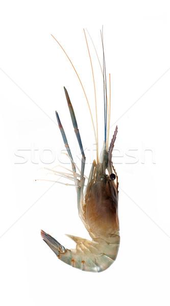Krewetki odizolowany biały kuchnia nogi powrót Zdjęcia stock © myfh88
