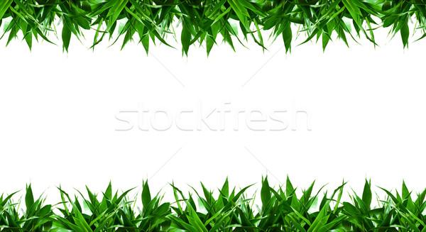 Bambu yaprakları çerçeve yalıtılmış beyaz bahar Stok fotoğraf © myfh88