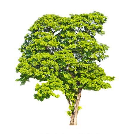 Ağaç yalıtılmış doku ışık arka plan mavi Stok fotoğraf © myimagine