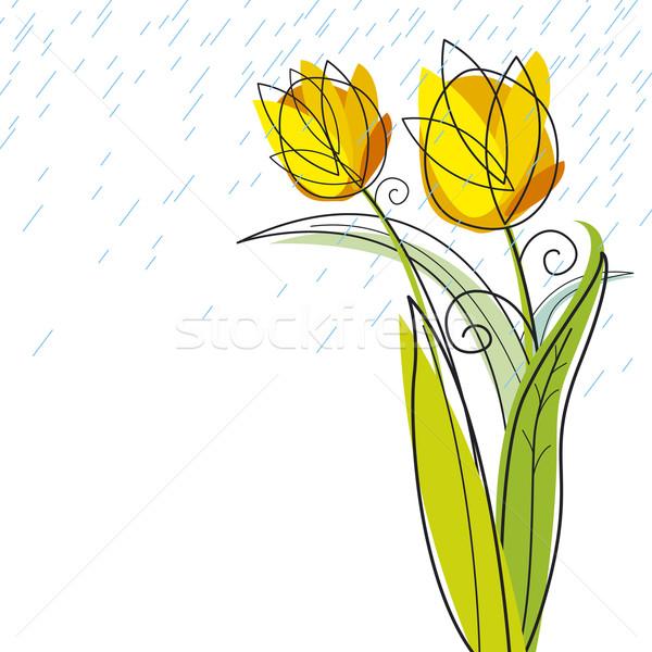 Lale dizayn beyaz çiçek bahar düğün Stok fotoğraf © myimagine