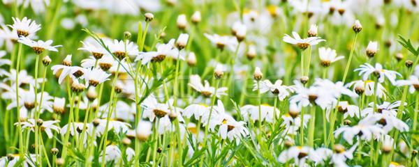 çiçekler bahçe ağaç arka plan duvar kağıdı Stok fotoğraf © myimagine