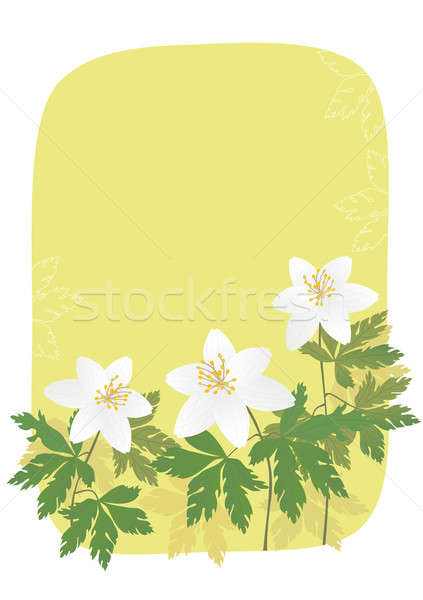 Anemone Stock photo © MyosotisRock