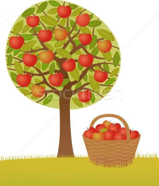 Apple harvest Stock photo © MyosotisRock