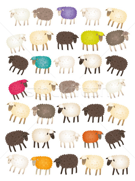 Stock photo: Sheep counting