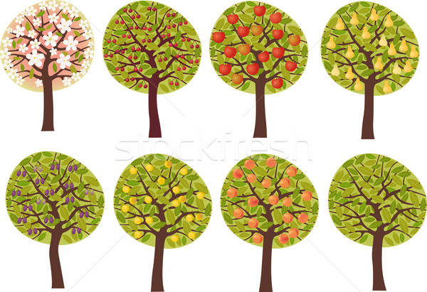 Fruit trees set Stock photo © MyosotisRock