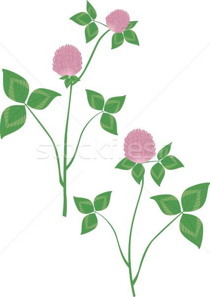 клевера цветок розовый сельского хозяйства луговой Sweet Сток-фото © MyosotisRock