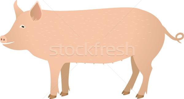 Porco fazenda animal agricultura vetor mamífero Foto stock © MyosotisRock