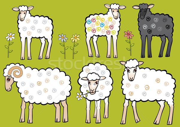 Set of sheep Stock photo © MyosotisRock