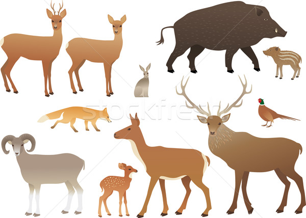 Floresta animais masculino raposa chifre isolado Foto stock © MyosotisRock