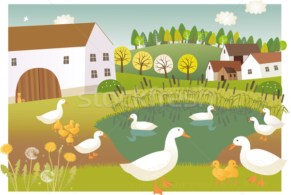 Duck farm Stock photo © MyosotisRock