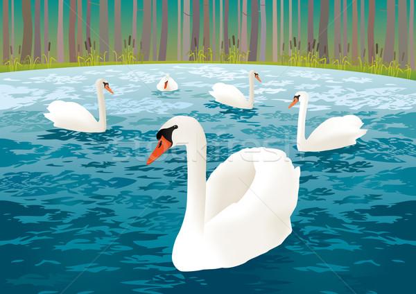 Swans Stock photo © MyosotisRock