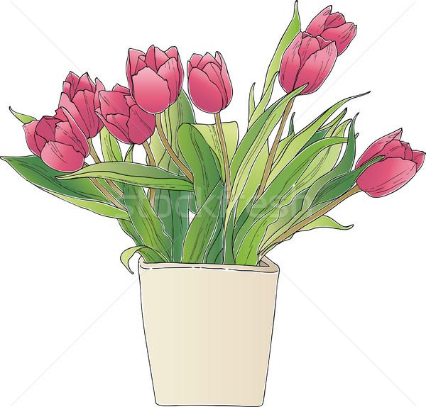 Tulips Stock photo © MyosotisRock