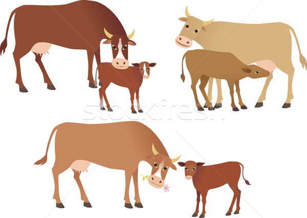 Cows Stock photo © MyosotisRock