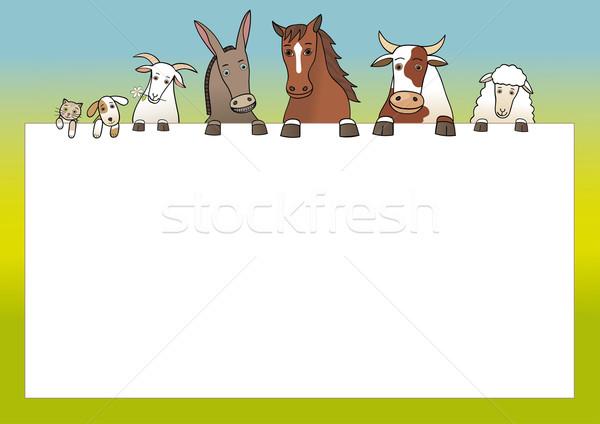 Boerderijdieren exemplaar ruimte gelukkig kat boerderij daisy Stockfoto © MyosotisRock