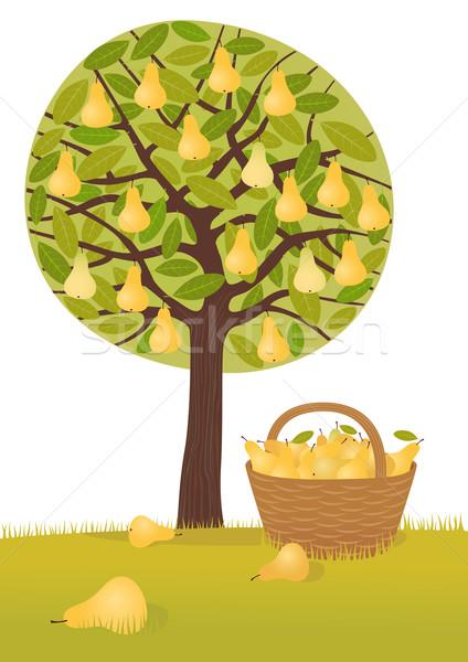 Pear harvest Stock photo © MyosotisRock