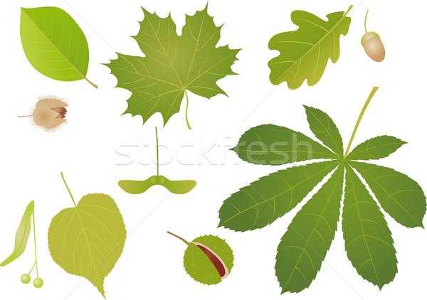 Grean leaves Stock photo © MyosotisRock