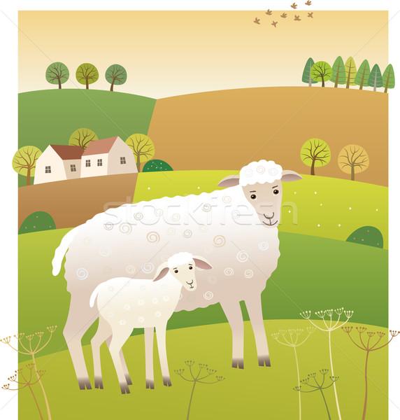 Stock photo: Sheep with lamb
