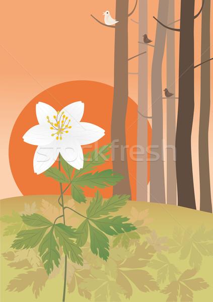 Stock photo: Anemone at the sundown