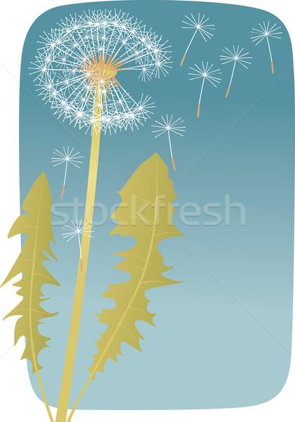 Tarassaco passato fioritura blu fiore frame Foto d'archivio © MyosotisRock