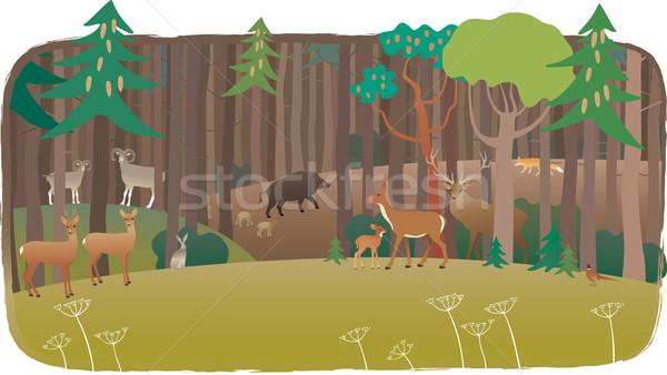 Floresta completo animais primavera jovem veado Foto stock © MyosotisRock