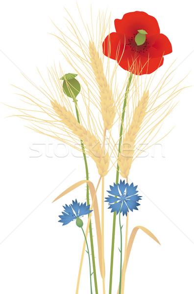 Grain Stock photo © MyosotisRock