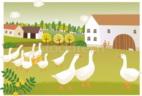 Goose farm Stock photo © MyosotisRock