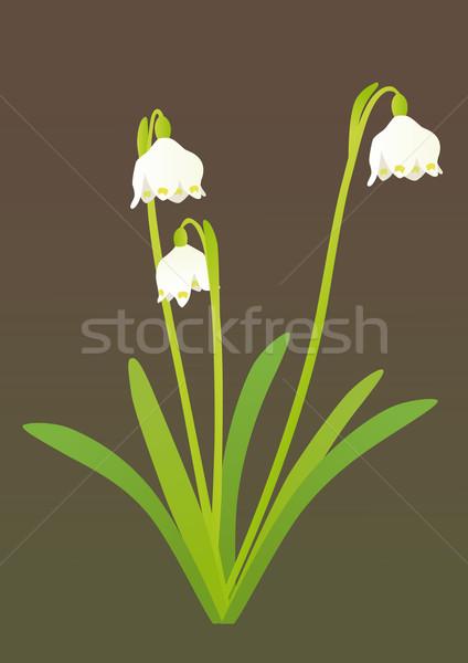 Primavera floco de neve beleza verde crescimento macro Foto stock © MyosotisRock