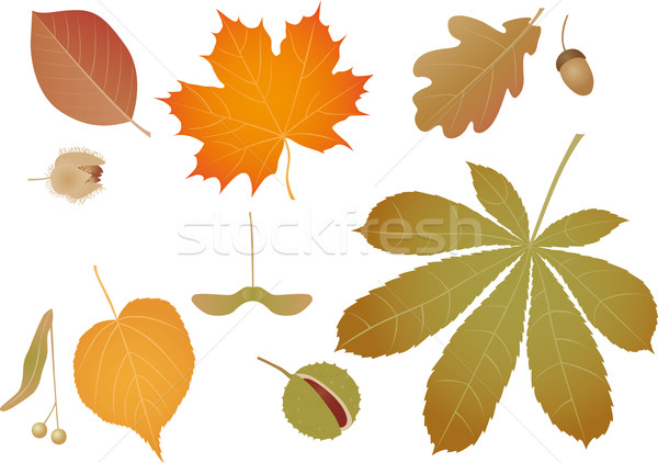 Coloured leaves Stock photo © MyosotisRock