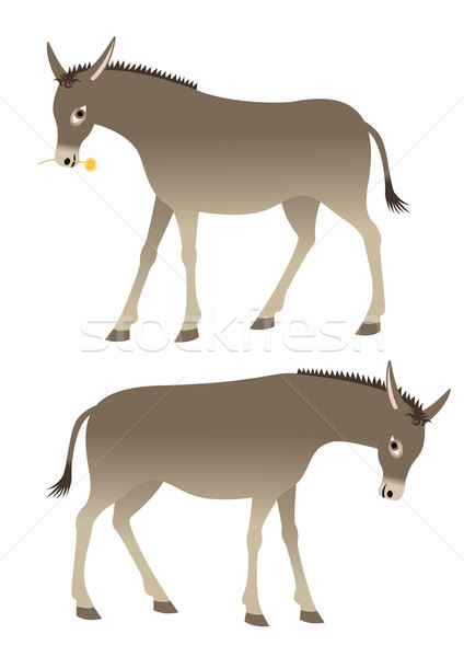 Donkey Stock photo © MyosotisRock