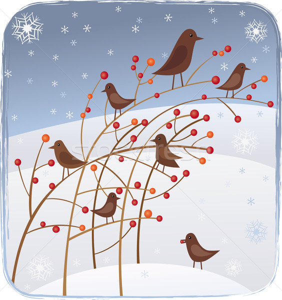 Birds,berries and snow Stock photo © MyosotisRock