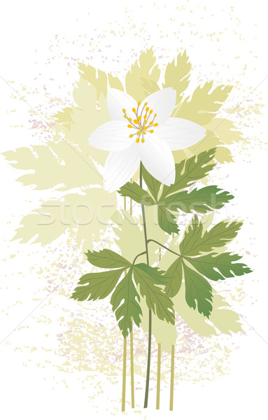Stock photo: Anemone