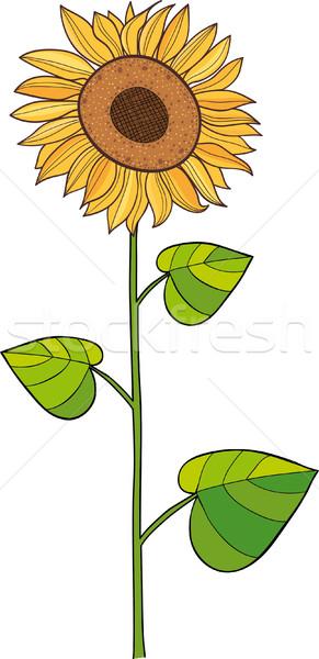 Sunflower Stock photo © MyosotisRock