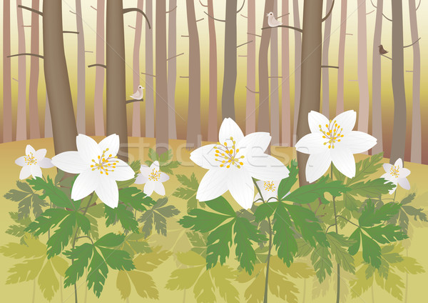 Anemone in a forest Stock photo © MyosotisRock