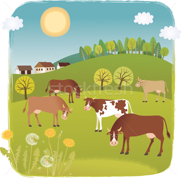 Stock photo: Cows