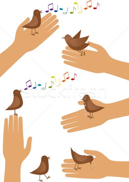 Stock photo: Bird and hand