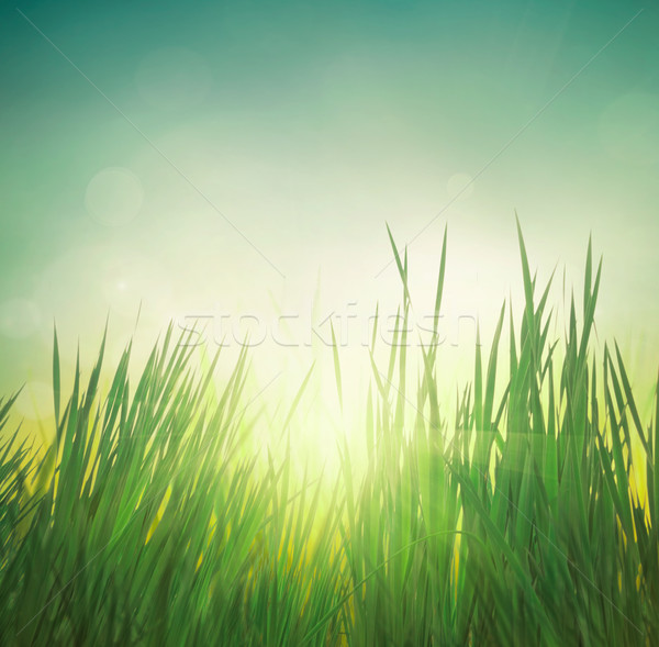 Spring grass Stock photo © mythja