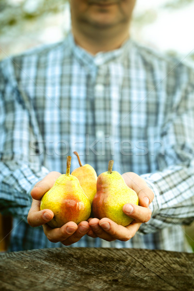 Fresh pear Stock photo © mythja