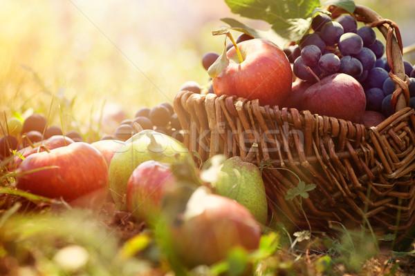 Organiczny owoców lata trawy koszyka świeże Zdjęcia stock © mythja