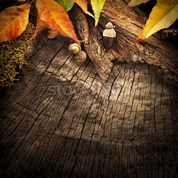 Stok fotoğraf: Sonbahar · orman · meyve · ağaç · havlama · renkli