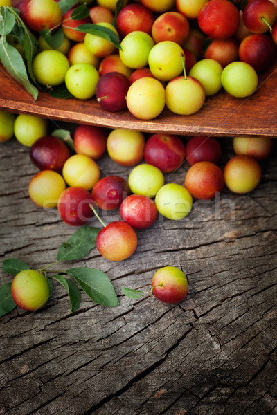 Fresh wild plum Stock photo © mythja